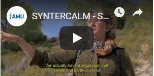 Syntercalm vignette video